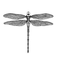 Black dragonfly vector