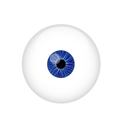 human eyeball vector image