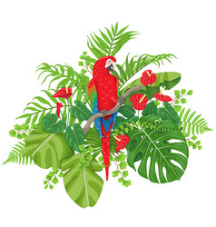 red macaw and tropical plants vector image