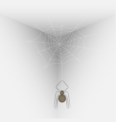 Spider on a web in the corner of the room vector
