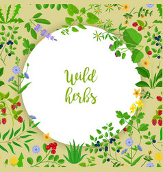 Wild herbs and berries circle frame vector