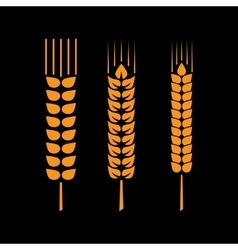 Set of wheat ears or rice vector