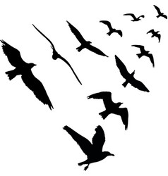 bird wedge silhouettes on white background vector image vector image
