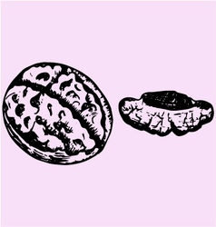 Cracked walnut vector