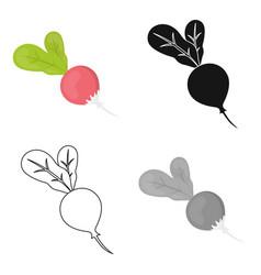 Radish icon cartoon singe vegetables icon from vector