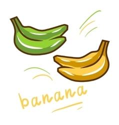 Yellow and green bananas vector