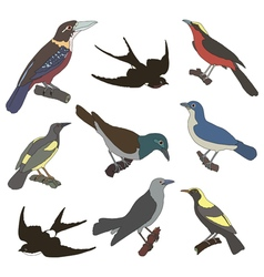 Collection of images of american birds vector