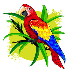 drawing of a large bright colored parrot on vector image