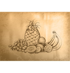 fruit sketch vector image vector image