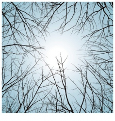 winter natural background vector image vector image