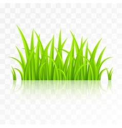 Grass isolated on transparent background vector