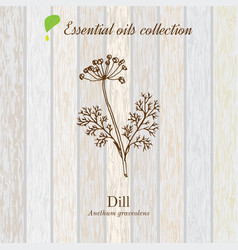 Dill essential oil label aromatic plant vector