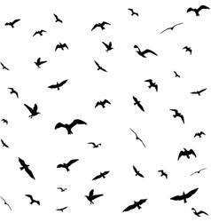 flying birds silhouettes on white background vector image vector image