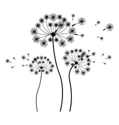 Silhouette set collection dandelion and fly petals vector