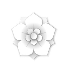 white paper flower vector image vector image