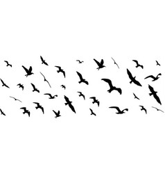 Flying birds silhouettes on white background vector