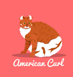 american curl cat on pink background vector image