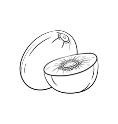 Hand drawn kiwi sketches vector image vector image