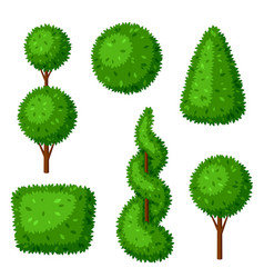 boxwood topiary garden plants set of decorative vector image