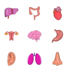 Human organs icons set cartoon style vector image vector image