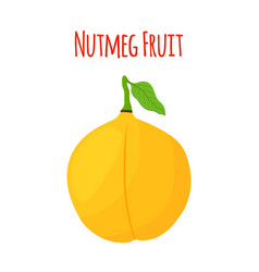 nutmeg fruit cartoon flat style vector image vector image