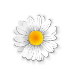 paper art chamomile vector image