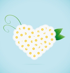 Chamomile heart vector