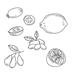 Hand drawn sketch fruits - feijoa lime dogwood vector