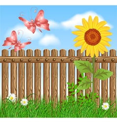 Wooden fence on green grass with sunflower vector