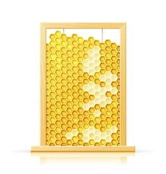 Bee honeycomb in frame vector