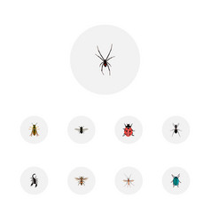 Realistic ladybird wasp ant and other vector