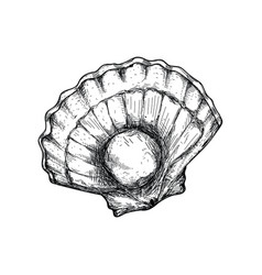 Fresh opened scallop hand drawn isolated icon vector