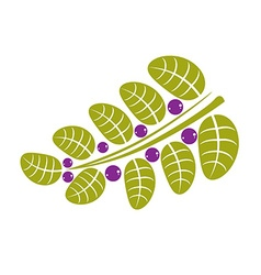 Simple green deciduous tree leaf with purple seeds vector