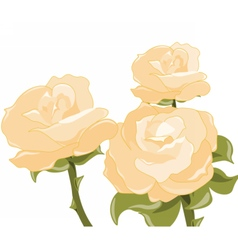 Yellow roses background vector