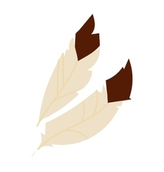 Decorative feather vector