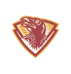 Hawk falcon bird head shield vector