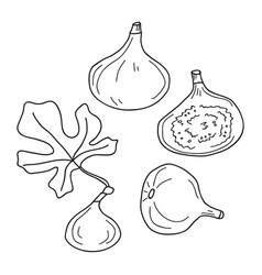 set with hand drawn figs in cartoon style vector image
