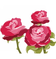 Abstract red rose background vector