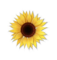 paper art sunflower vector image vector image