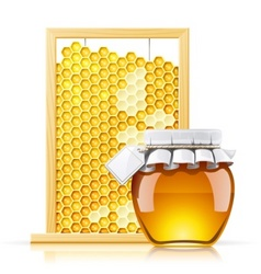 Jar with honey and honeycomb vector