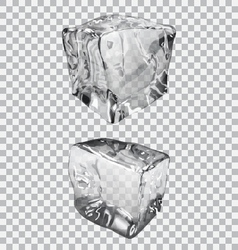 Transparent ice cubes vector image vector image