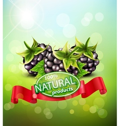 Background with blackberries and red ribbon vector