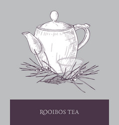 Elegant teapot glass cup with steeping rooibos vector