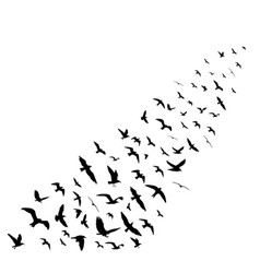 Bird wedge silhouettes on white background vector