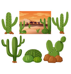 Desert field with cactus plants vector