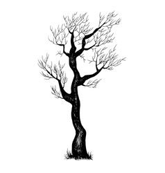Eps 10 of hand drawn tree vector image vector image