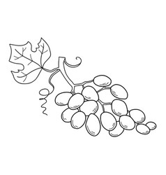 Hand drawn sketch fruit - grape eco food vector