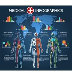 Human Body Anatomy Infographic vector image