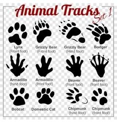 Animals Tracks - set vector image vector image