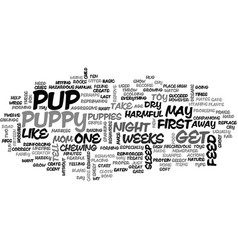 Basic puppy care first weeks text word cloud vector